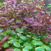 pupuk cair aquascape PURPLE'S GROW