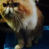 Jasa Pacak Kucing Peaknose Ekstream Murah Cimahi - Bandung