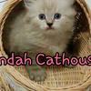 Persia Kitten Flatnose bisa COD murah berkuakitas