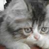 Ready for adopt kucing anakan 3-4bulan