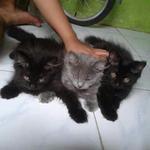 kucing-kitten-unyu