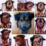 dihibahkan-anjing-non-ras---mixed-breed-lucu-gratis
