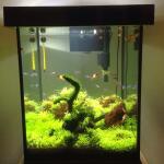 paket-aquarium-lengkap--aquascape