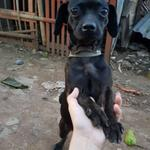 open-for-adoption-anjing