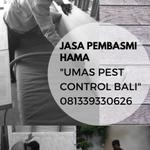 the-best-pest-control-in-bali