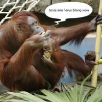 manusia-indonesia-mengenai-natal