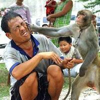 perjalanan-sejarah-topeng-monyet-di-indonesia