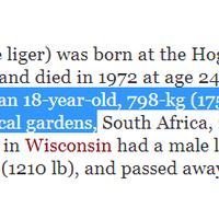 hercules-kucing-terbesar-di-dunia