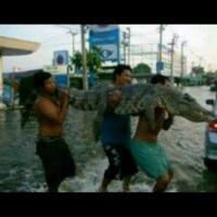 ternyata-buaya-takut-banjir