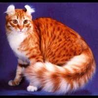 yang-suka-pelihara-kucing-masuk-gan---sis--jenis-jenis-kucing-yang-sering-di-pelihar