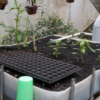 all-about-aquaponic-beautiful-and-delicious