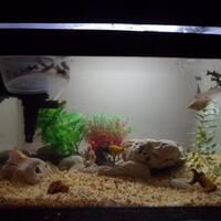 ayo-gan-silaken-posting-aquariumnya-di-sini