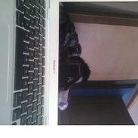 macbook-a1237