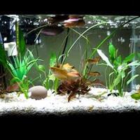undergravel-kit-for-graveled-aquarium