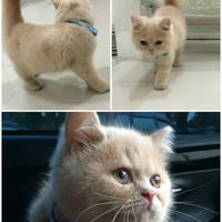 cat-lovers-kaskus-read-page-1-first---part-4