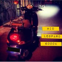 hid-leopard