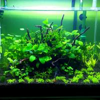 aquascape-for-everyone-learning-and-sharing---part-2