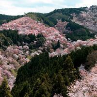 7-lokasi-di-kansai-yang-wajib-dikunjungi-waktu-musim-sakura