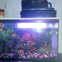 tips-membuat-filter-aquarium-tanpa-kuras-air-selamanyaaaaa-100-tahun