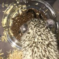 hedgehog-lover-come-in----2nd------part-4