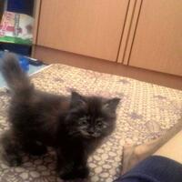 973397339619958095809658persian-cats-lover-organization966895809580961997339733