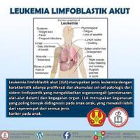hmpd-untad---leukemia-limfoblastik-akut