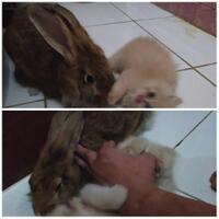 rcc-rabbit-lover---part-3