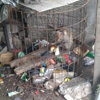 komunitas-penyayang-binatang-di-denpasar