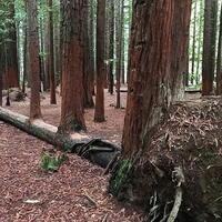10-pohon-unik-yang-menolak-mati