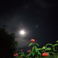 bulan-tadi-malam