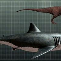 fakta-tentang-hiu-megalodon-yang-dikenal-sebagai-hiu-raksasa-dan-hiu-purba