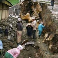 penemuan-fosil-raksasa-purba-gemparkan-warga-pecalukan-prigen