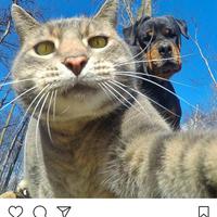 saking-lucunya-7-selebgram-kucing-ini-bisa-bikin-hati-kita-meleleh