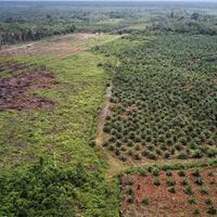uni-eropa-gencar-kampanyekan-isu-deforestasi-ke-kelapa-sawit