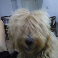 dog-lovers-bogor---part-3