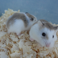 new-hamster-lovers---part-3