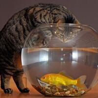 coc-pets-tips-dan-kiat-jitu-merawat-kucing-sederhana-namun-penting-aslinyalo