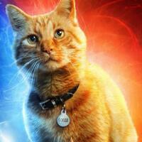 kupas-misteri-kucing-alien-peliharaan-captain-marvel