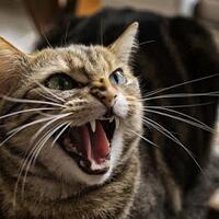agan-sista-punya-kucing-yang-galak-bisa-jadi-karena-meniru-kebiasaan-kita-lho