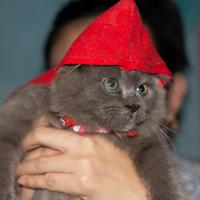6-jenis-kucing-favorit-ane-nomor-4-tatapannya-luar-biasa