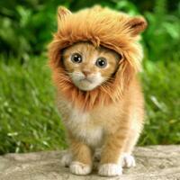 ternyata-kucing-tercipta-dari-bersin-singa