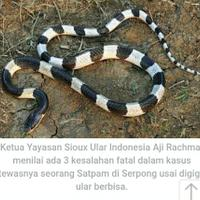 ular-berbisalah-pelakunya