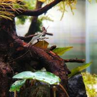 new--freshwater-fish-lounge---part-3