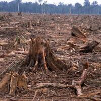 sangat-mengkhawatirkan-5-negara-dengan-tingkat-kerusakan-hutan-terparah-di-dunia