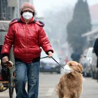 virus-corona-dari-wuhan-mengudara--anjing-pun-ikut-memakai-masker