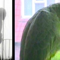 burung-beo-ungkap-skandal-perselingkuhan-suami-dengan-pembantu-kok-bisa