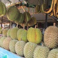 pedagang-durian-ini-ditipu-pakai-duit-palsu-kok-tega-banget-ya