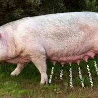 kronologi-jemaat-gereja-hkbp-di-sumut-keracunan-usai-santap-daging-babi