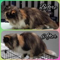 central-cat-grooming---home-service-mandiin-kucing-jakarta---tangerang