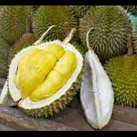 bikinnya-gampang-yuk-coba-5-olahan-durian-ini-enaknya-berkali-kali-lipat